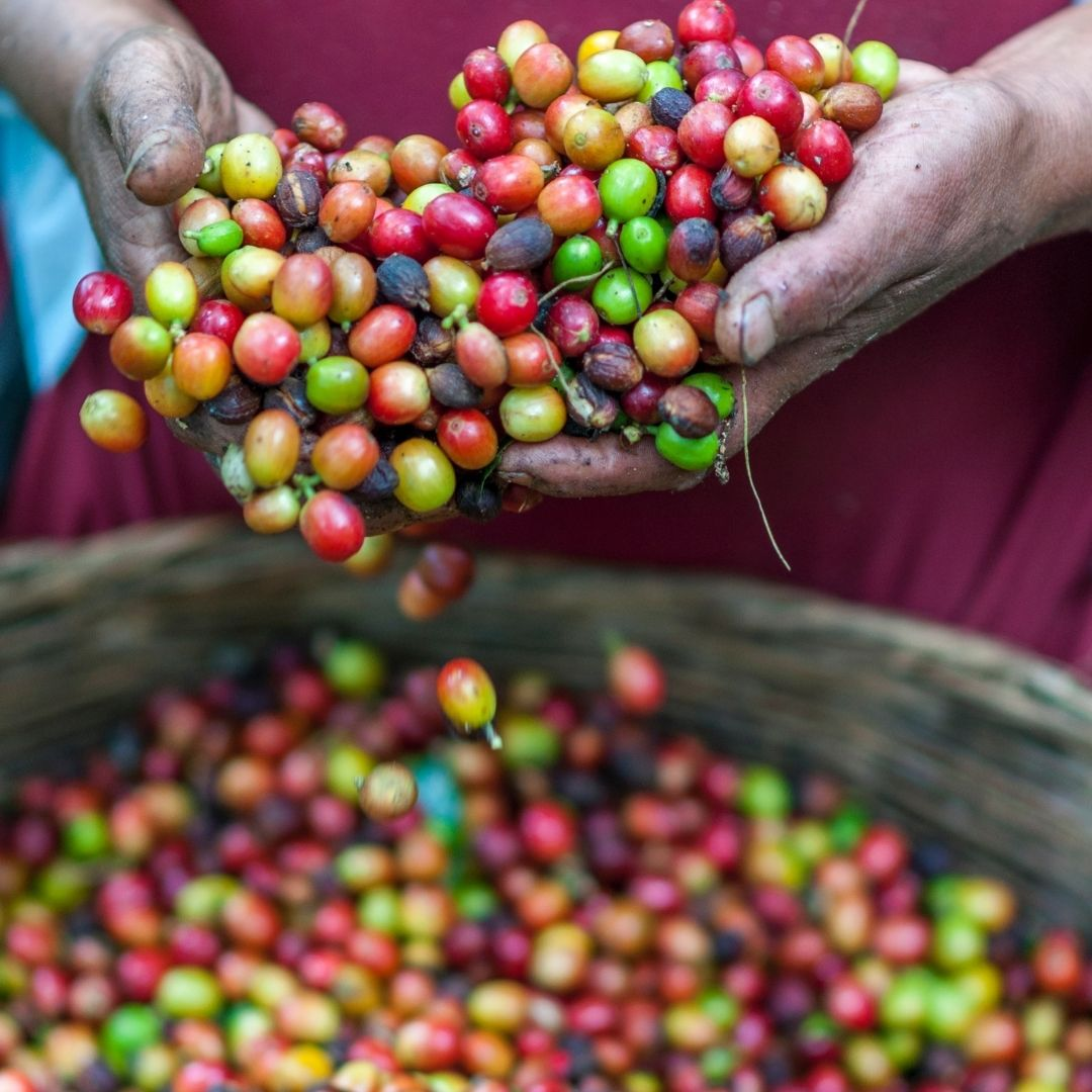 Coffee Certification Explained